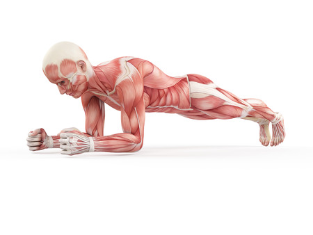 42587703 - exercise illustration - plank